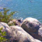 Beaver Lake Turtle